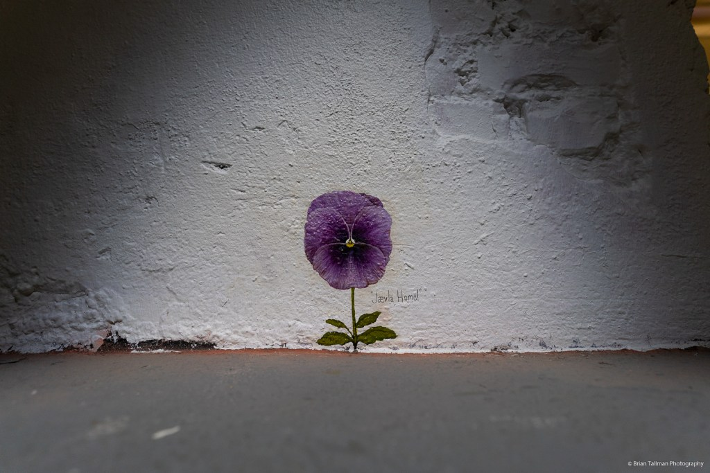 A pansy from Paul Harfleet. Taken as part of the Pansy Project