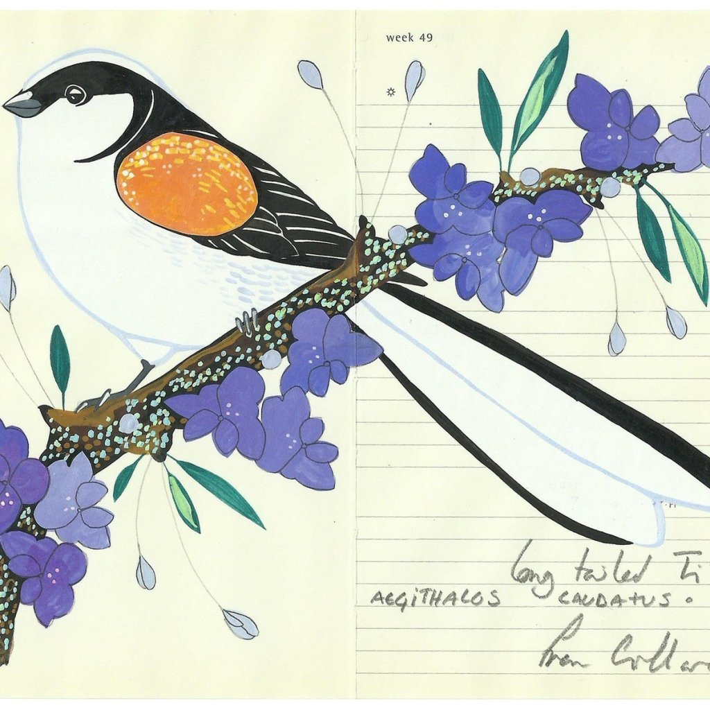A drawing of a Long Tailed Tit by Fran Giffard. The birds were number 9 on the 2020 Big Garden Birdwatch