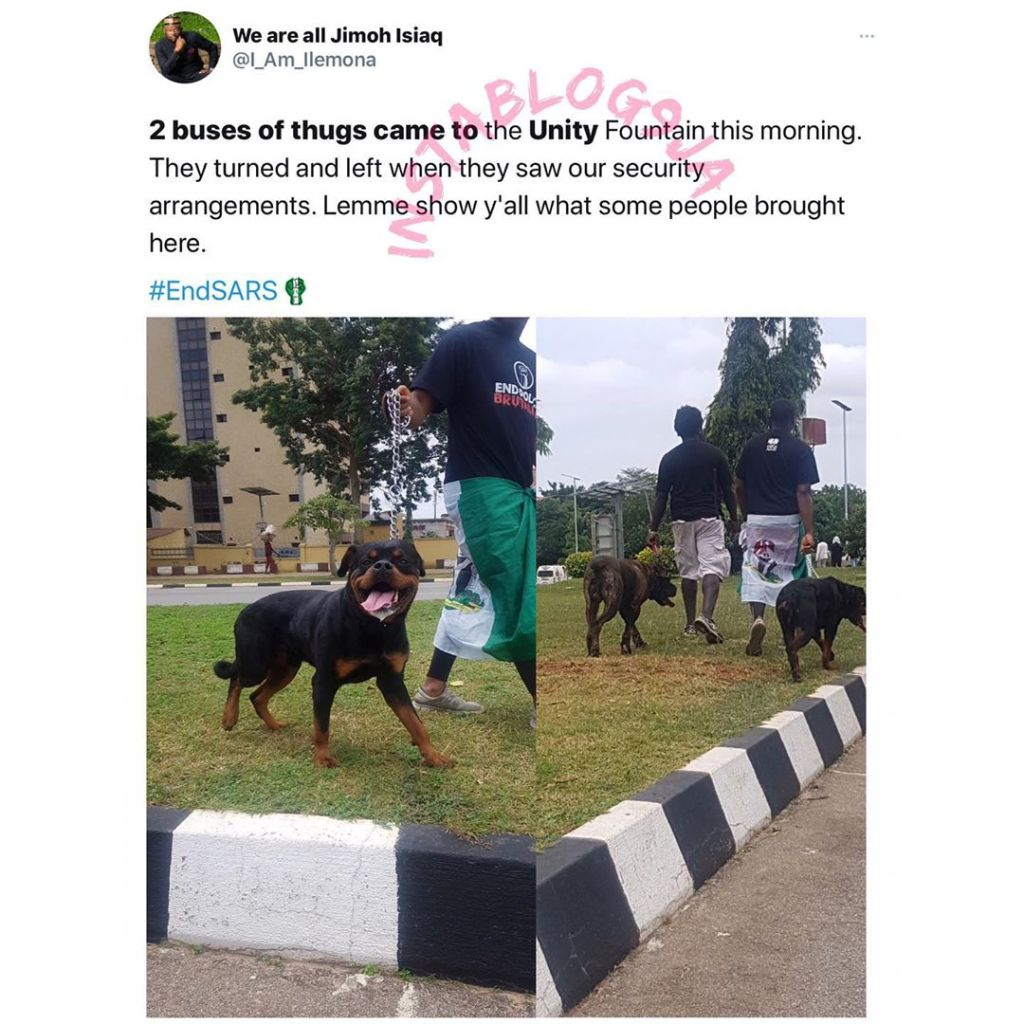 Dogs save the day in Abuja during the #EndSARS protest