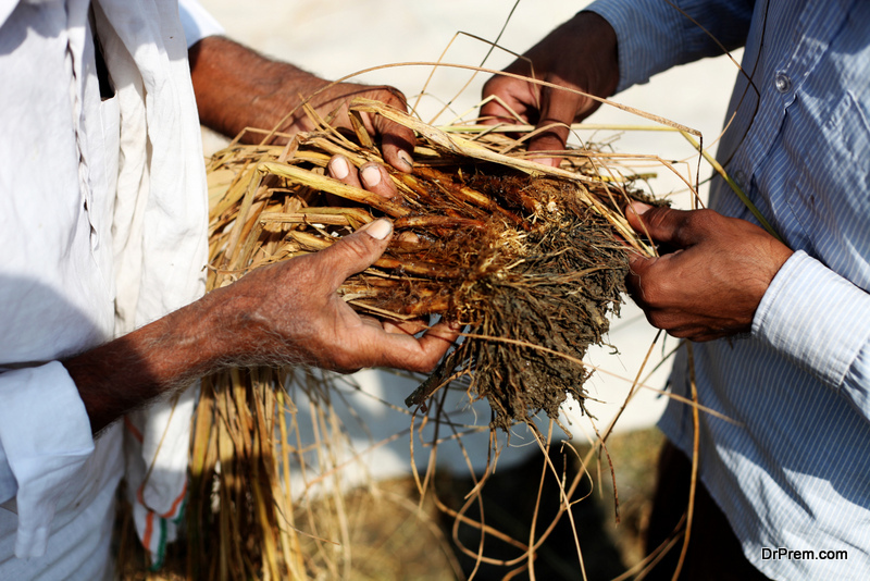 Indian farmers in distress end lives