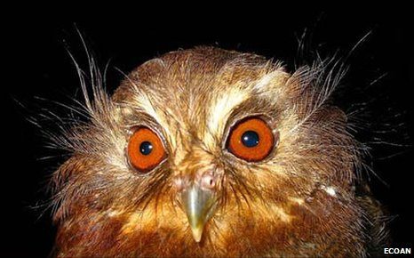 50239648 strange owl WnUMk 32853