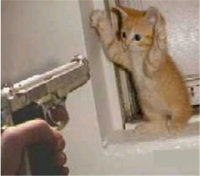 cat tax cat holding hands up gun pointing at him 7