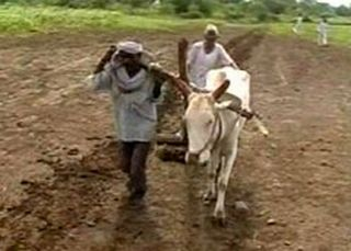 farmers bullockcart 26