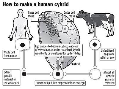 hybrid embryos 69