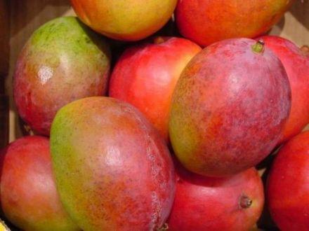 indian mangoes us market1 26