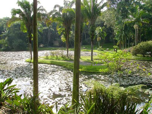 jardim botanico de sao paulo ZRU6r 16085
