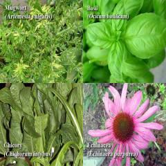 medicinalherbs SUSyn 6943