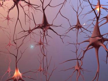 neurogenesis rD7cu 16613