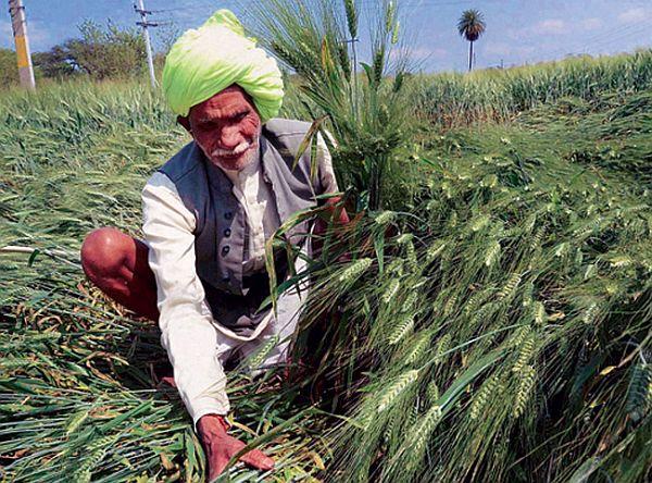 Rabi crop damage