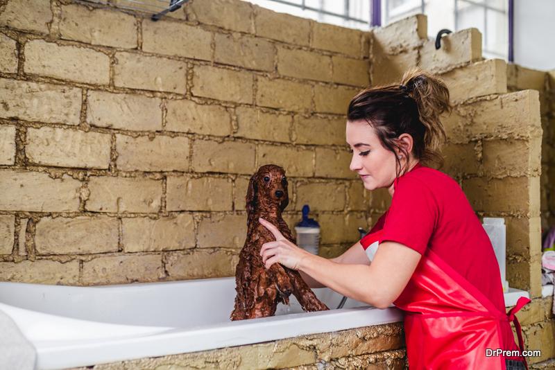 Brush and Bathe Your Dog Regularly