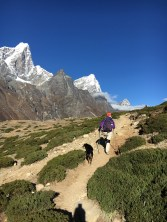 This canine citizen of Dingboche decided to follow me for a couple of hours as we hiked out of the town.