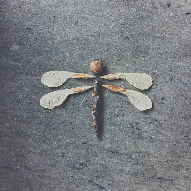 Brock Davis - Dragon Fly - Instagram