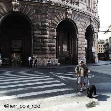 Herr_pola_roid