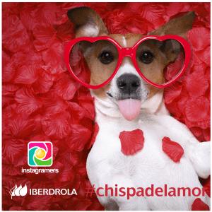 chispadelamor_PERRO-instagram_concurso_iberdrola