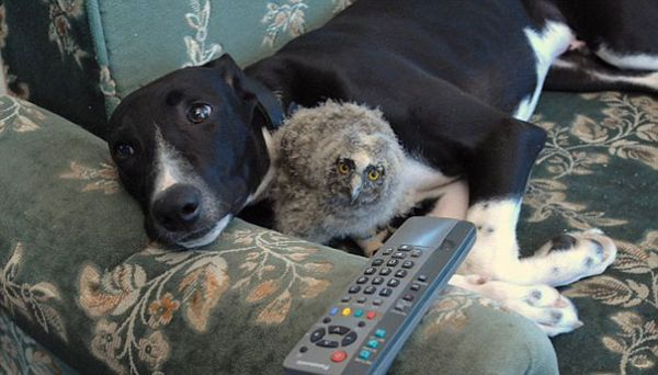 The dog and the owl