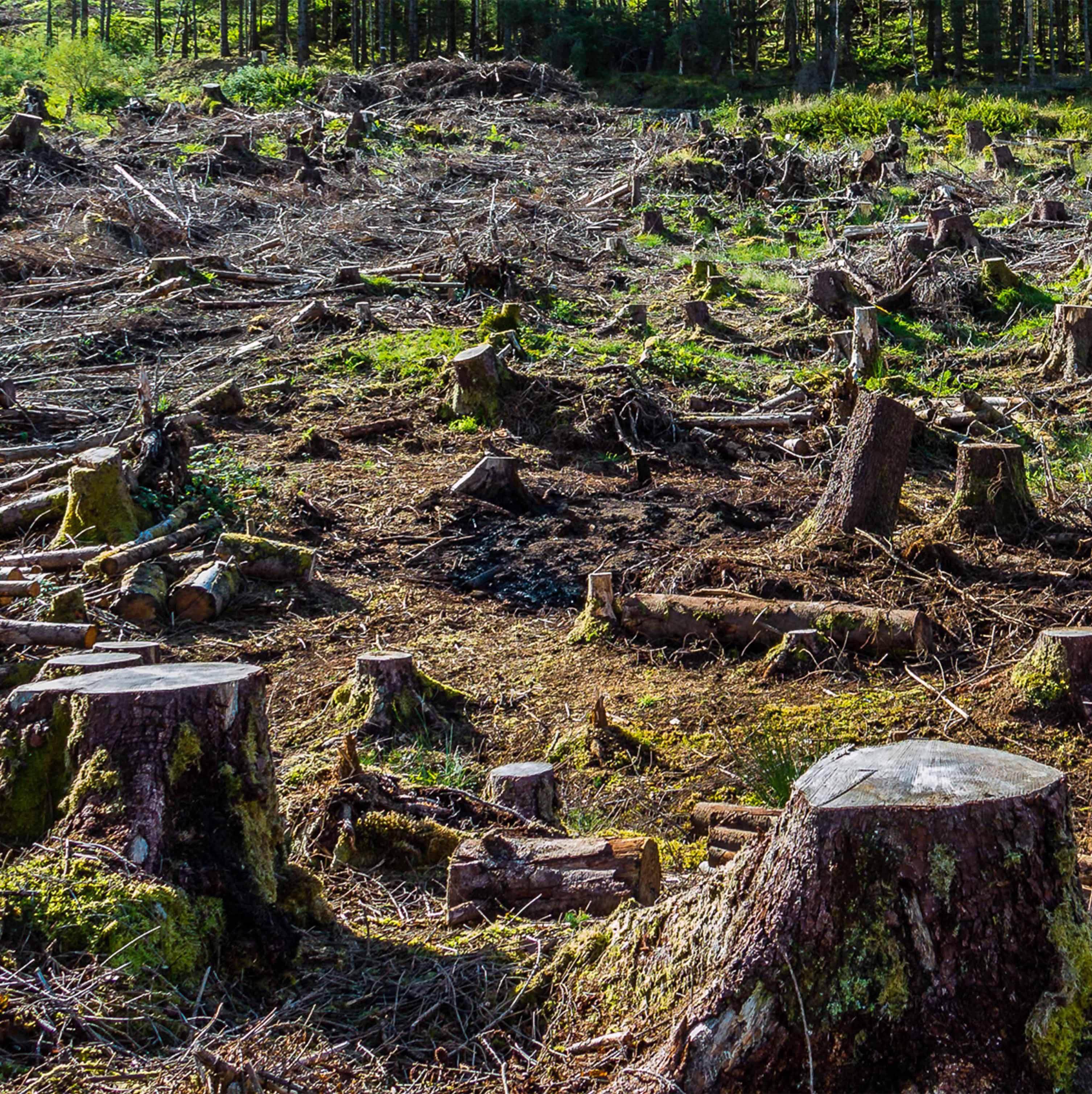 Wald brach