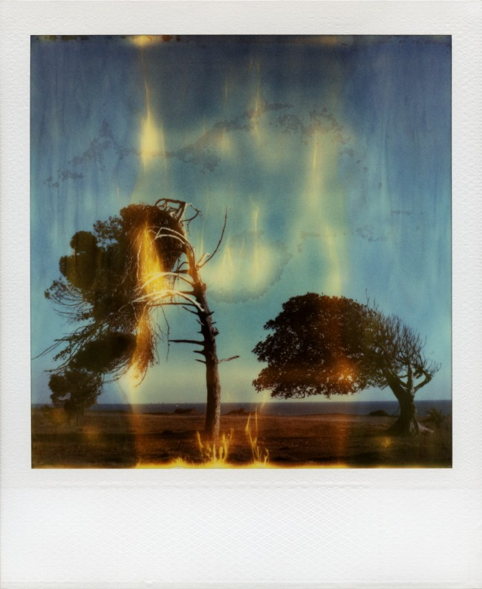 sx70sunkencitytrees