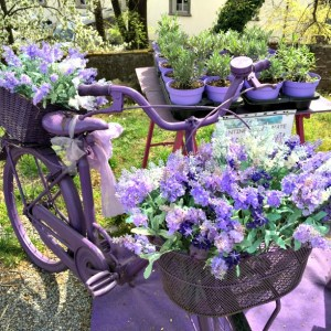 Life in Italy: lavender at a market in Lucca, Tuscany
