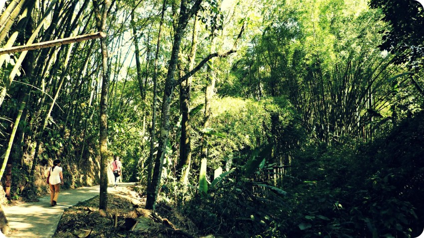Bosque de árboles en el Parque de la Vida en Armenia