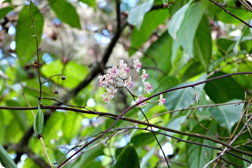 Fleur d'orchidée dans un arbre du village de Portugal