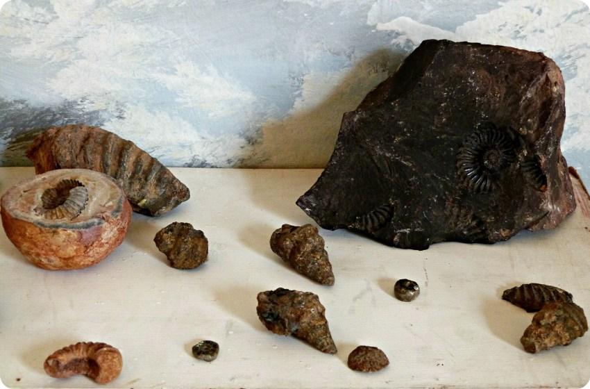 Fósiles presentandos en una mesa, en el museo nacional del sombrero en la casa de la cultura en Aguadas
