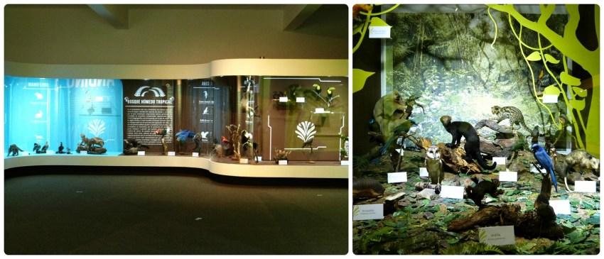 Vitrines du musée d'histoire naturelle de Manizales