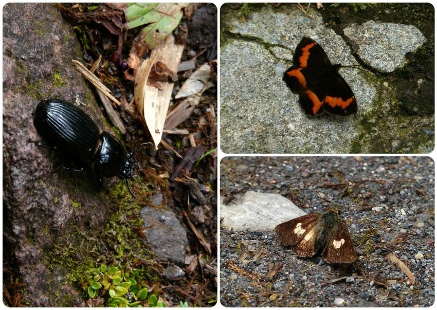Insectos en el camino hacia los termales de san juan en el parque natural Puracé