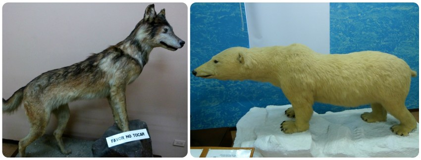 Animaux exposés au Musée d'histoire naturelle de Popayán