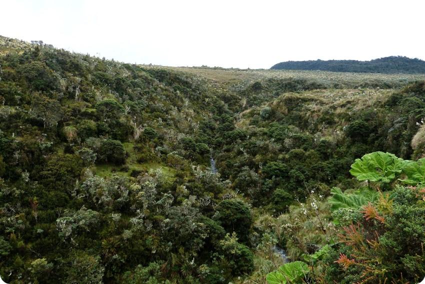 Paisaje del paramo en el Parque Natural Puracé