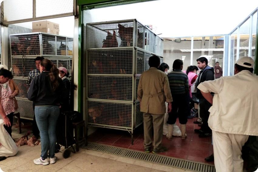 Poulets dans des cages au marché de Bogotá