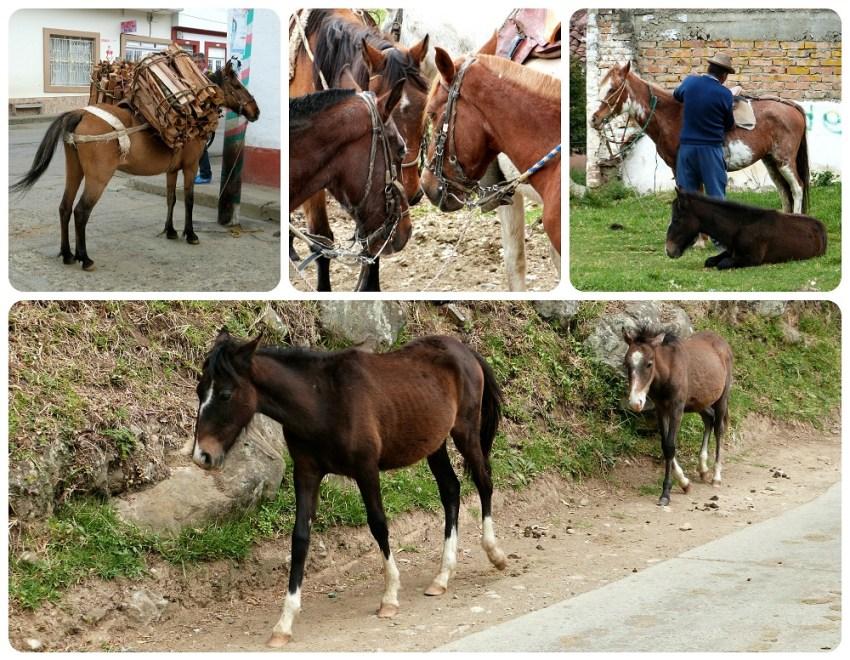caballos en silvia