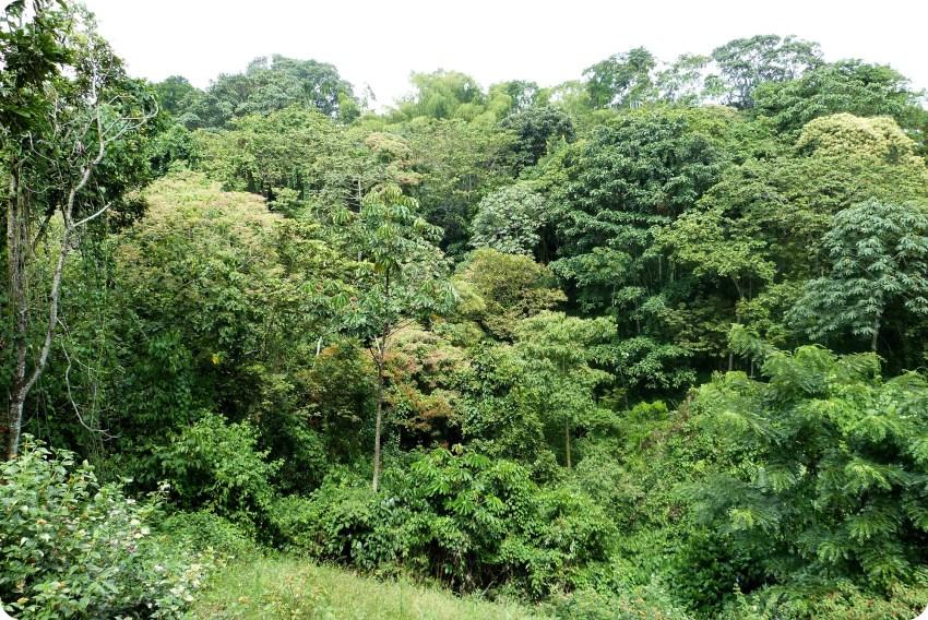 Forêt au jardin botanique du Quindío à Calarcá