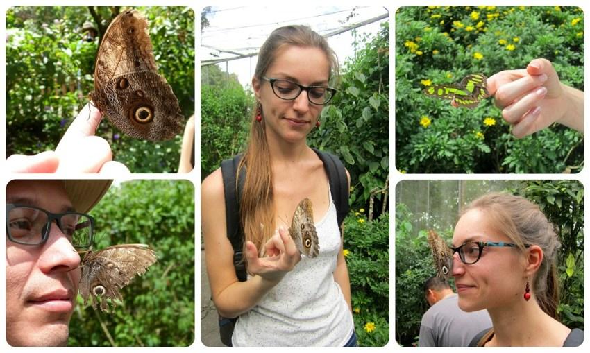 Charlène et Charles tenant des papillons dans les mains au Mariposario du jardin botanique du Quindío à Calarcá