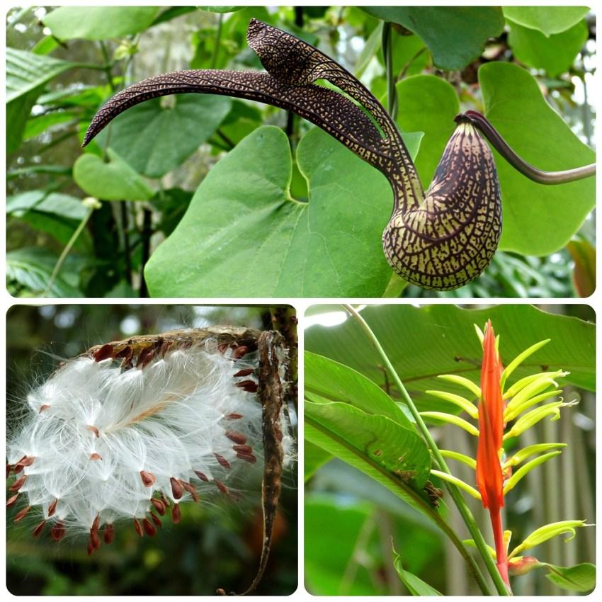 Plantes du jardin botanique du Quindío à Calarcá