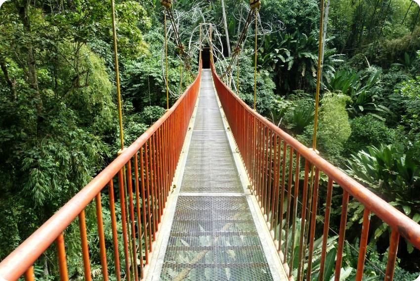 puente colgado en el jardín botánico del Quindío en Calarcá