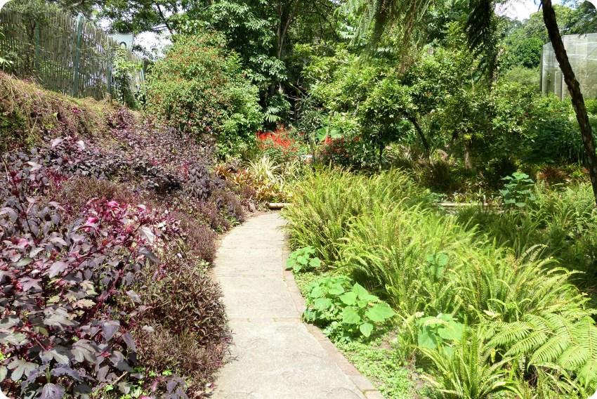 chemin du jardin botanique du Quindío à Calarcá, à gauche des fleurs violettes et à droite des plantes vertes