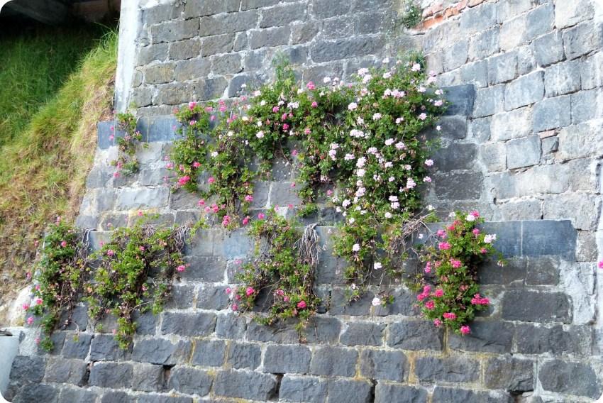 flores en un muro en el Santuario de las Lajas de Ipiales