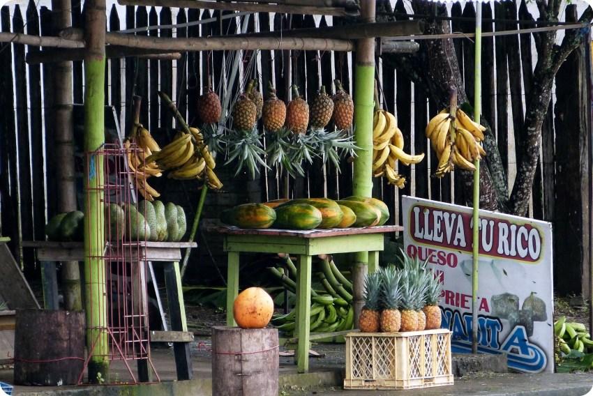 fruits pendus sur le bord de la route vers Pedernales