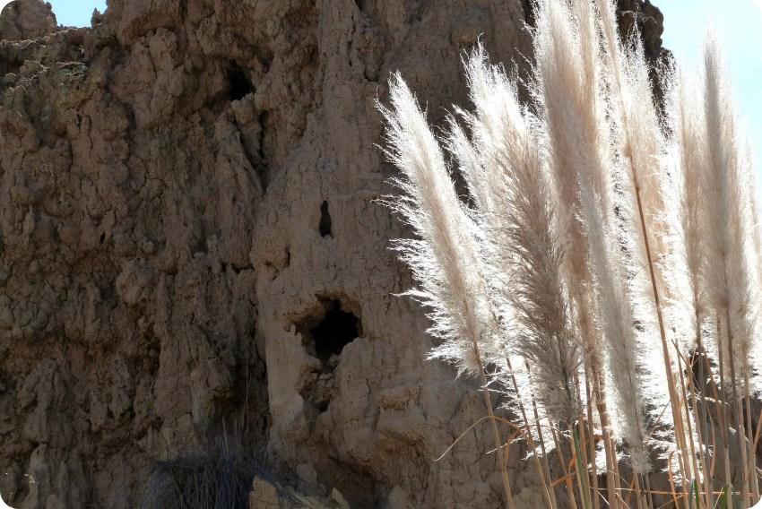 graminées dans le désert de la tatacoita de Nemocón