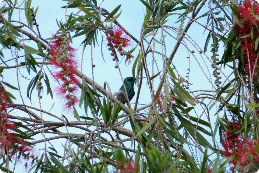colibri en un árbol en la Mitad del Mundo de Quito