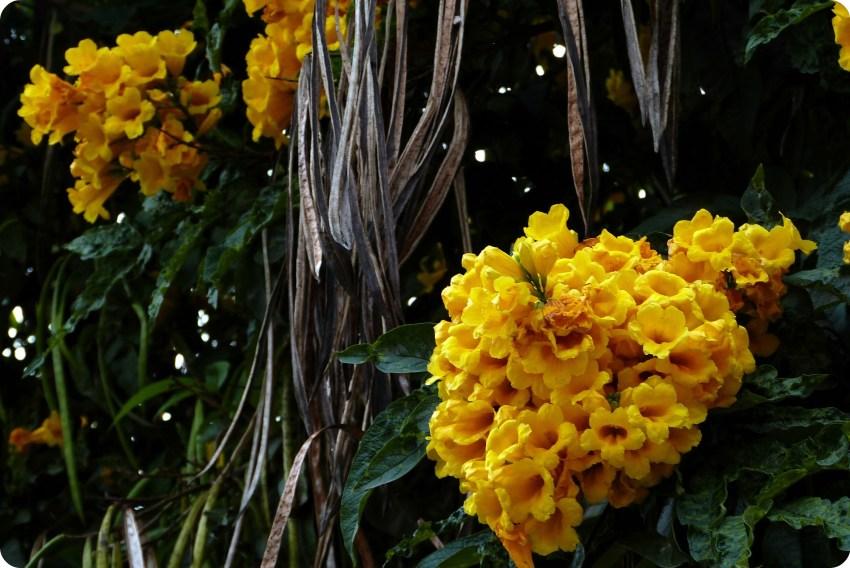 flores amaraillas en la Mitad del Mundo de Quito