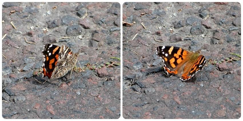 papillon posé sur le sol de la Mitad del Mundo de Quito