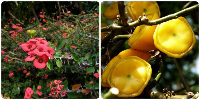 fleur et fruit au jardin botanique de Medellín