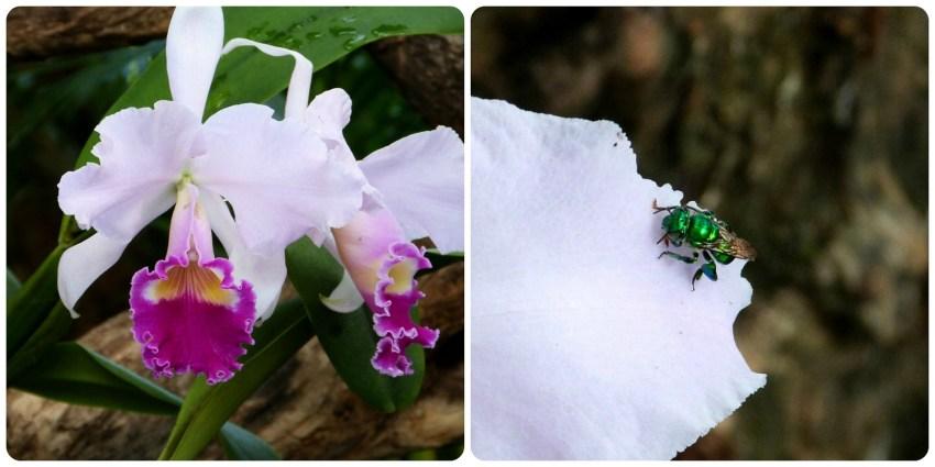 mosca sobre una flor de orquídea en el jardín botánico de Medellín