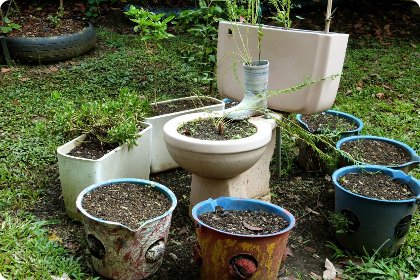 Plantes plantées dans une cuvette de toilettes au jardin botanique de Medellín