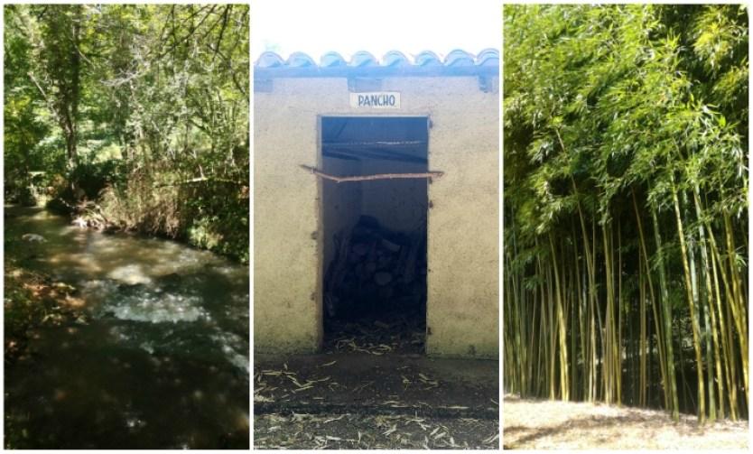 rivière pas du roc bambous