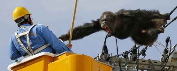 Kyodo - AP- Japan - chimpanzee