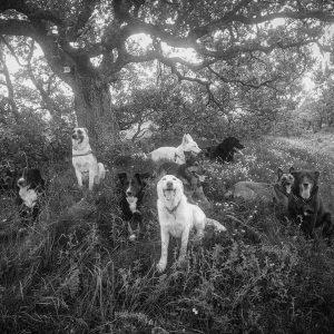 Instinct de Chien - Education, rééducation canine à domicile en Drôme Ardèche - Comportementaliste sur Montélimar et Aubenas - Balade collective, socialisation