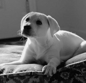 Instinct de Chien - Education, rééducation canine à domicile en Drôme Ardèche - Comportementaliste sur Montélimar et Aubenas - cours individuel chiot - accueil et choix du chiot