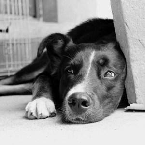 Instinct de Chien - Education, rééducation canine à domicile en Drôme Ardèche - Comportementaliste sur Montélimar et Aubenas - Pension, pettsitting, garderie, promenade